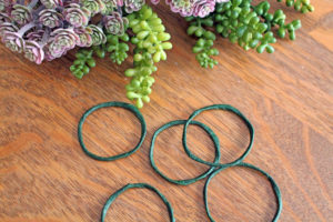 succulent napkin ring | polka dots and picket fences